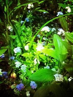 jardin Papa Maman Plancher bas mai 2013