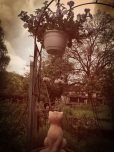 Figurine chat terre cuite sous pot de fleur, jardin Papa Maman, Plancher bas, mai 2013