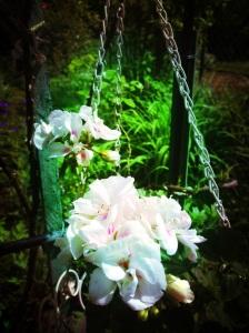 Jardin Papa Maman, Plancher bas, mai 2013