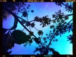 """Objectif sous une fleur, ciel bleu et filtre """"abracadabra"""" Appl Tadaa."""