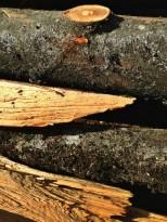 Troncs et éclats de bois