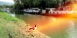 L'oie au bord du canal