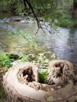 Souche en coeur au bord de la rivière