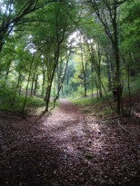 Le chemin à suivre indiqué par le soleil à travers les arbres. Combe Semetrot Marsannay la Côte