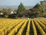 A Couchey, les rangs de vigne jaunissent