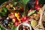 fruits automne