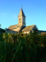 Eglise romane de Fixin au pied des vignes et de sa fleur de tournesol