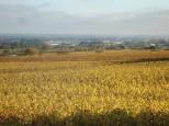 Les vignes prennent la couleur de la Côte d'Or