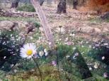 champs de fleurs sauvages sous les oliviers